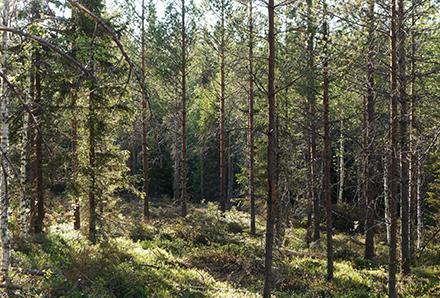 Skogan 2