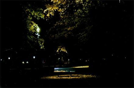 natt_i_humlegarden